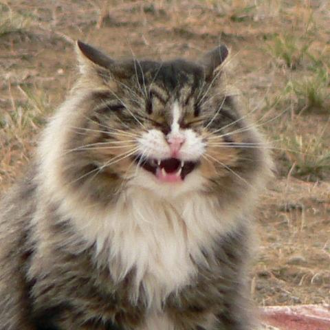 bandy-laughing-4x4