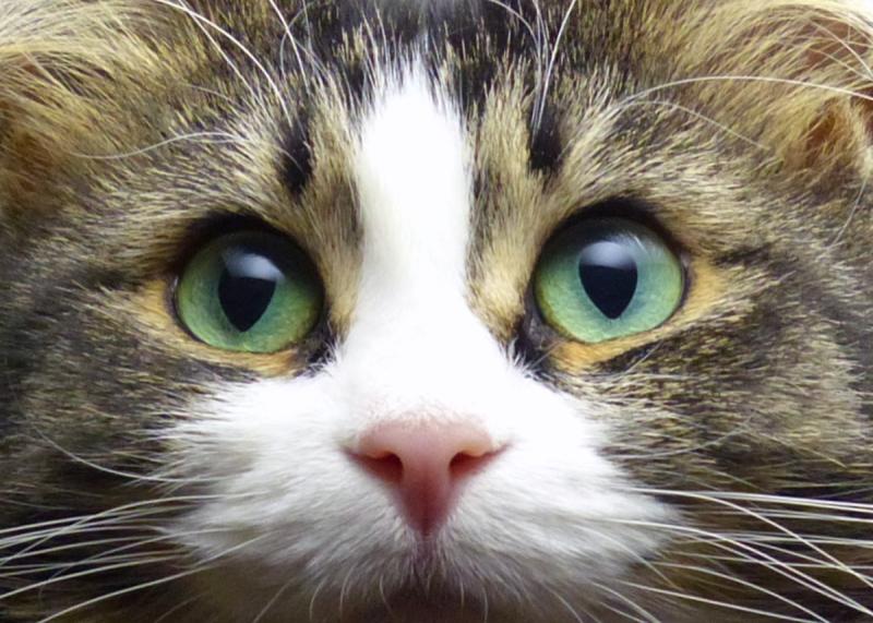 bright-eyes-2-fz200-nov-09-2012