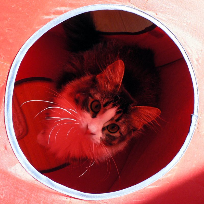 bright-eyes-in-her-red-nylon-play-cube