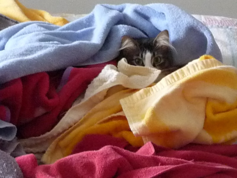 bright-eyes-in-the-towels-05-26-2010-tz5