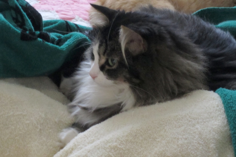 bright-eyes-on-the-towels-12-10-2011