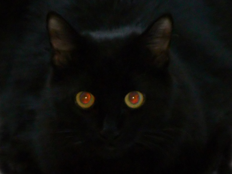 bug-red-eyes