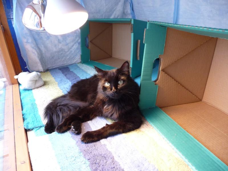 bug-inside-big-cathouse