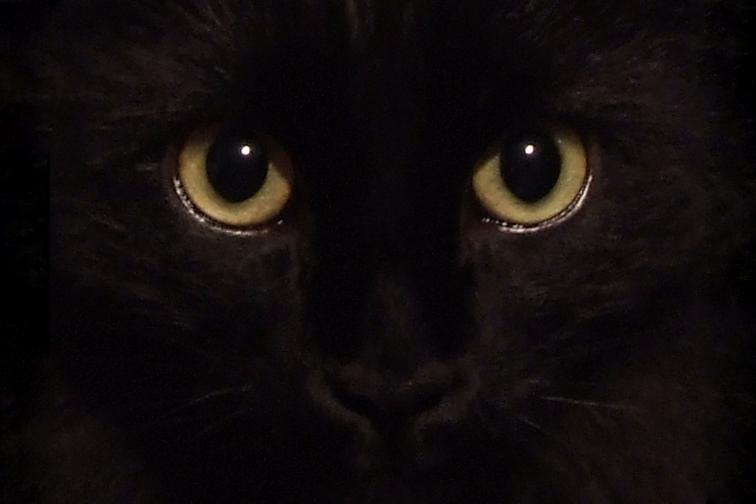 bugs-eyes1