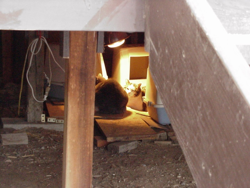 cat-condos-under-back-porch-1-dec-13-2001