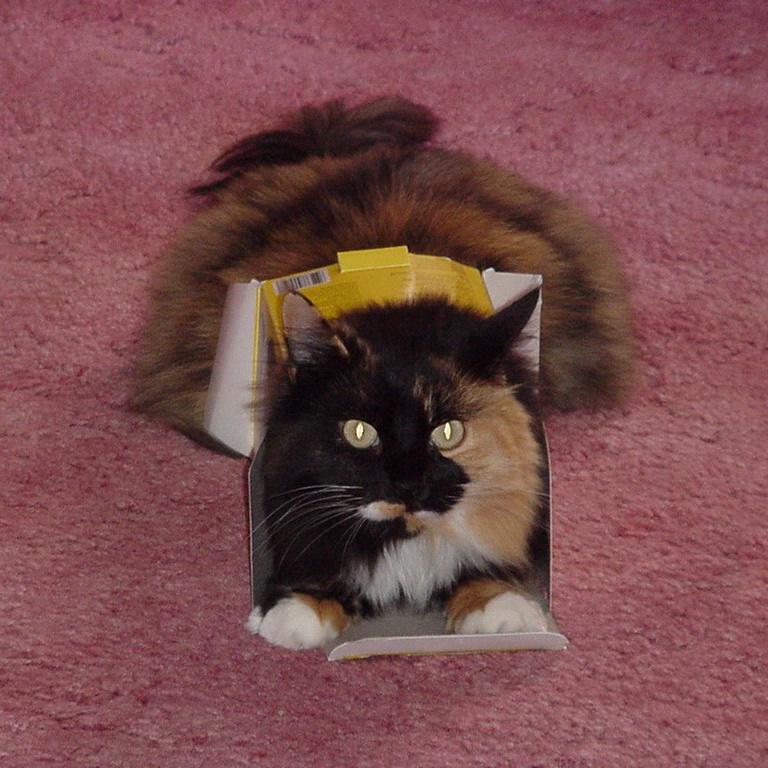 fancy-in-a-box-9-6-1999-mavica88