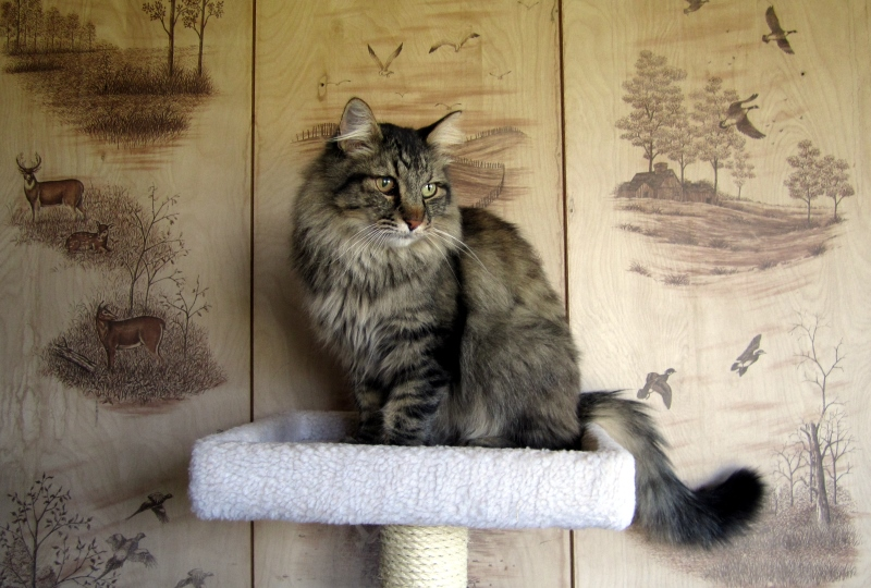 fuzzy-butt-on-cat-tree-08-30-2012