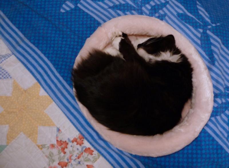 pookie-on-pink-sleeper-tz5-nov-5-2010