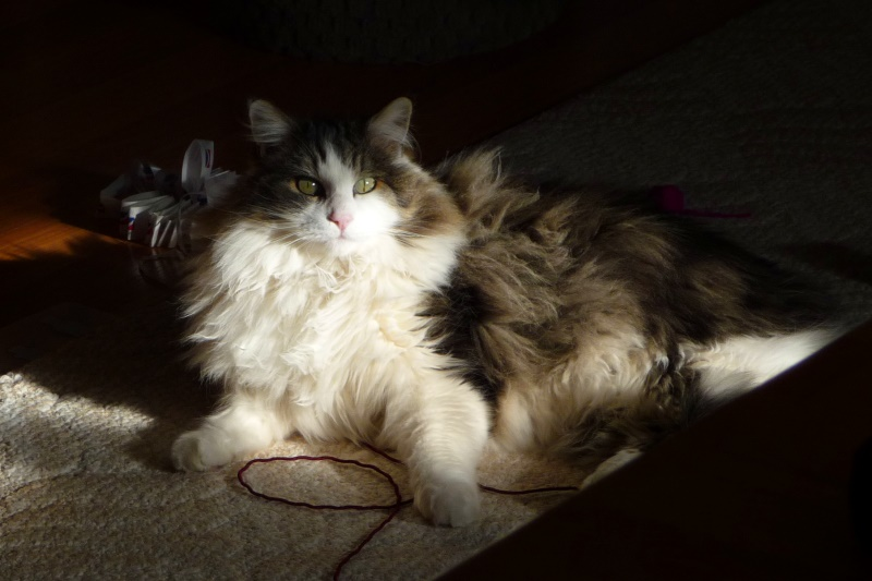 pretty-girl-sunshine-fluffy-12-09-2009-tz5