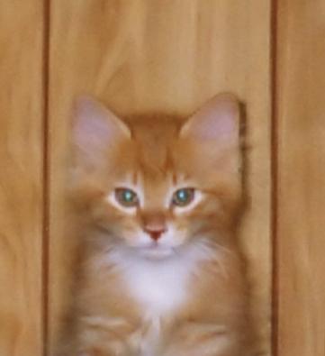 raja-kitty-1