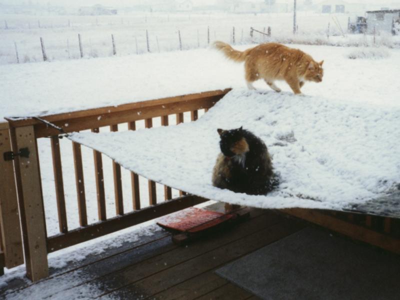 rajafancy-on-tarp-in-snow