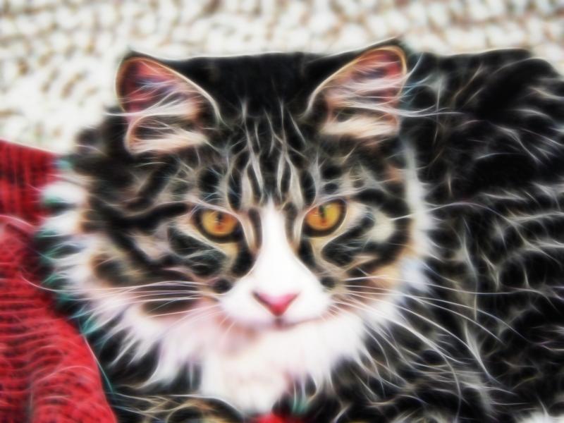 spit-kitty-frac-10-30-2008