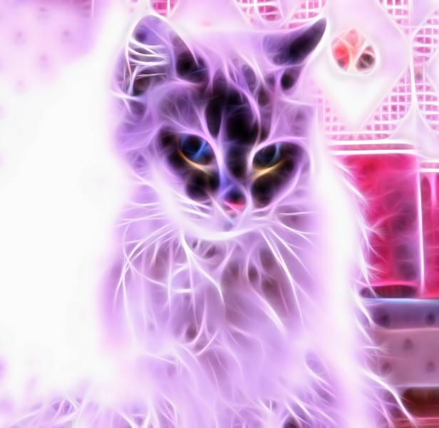 swoozie-violet-fractalius-600-02-23-2016-fz200