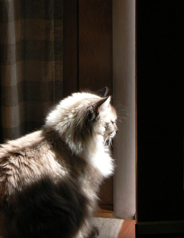 swoozie-peeking-out-the-door-08-13-2011-fz5